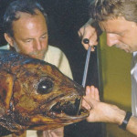 Mike and Jürgen Schauer extracting a sample for DNA analysis from the first coelacanth specimen in the East London Museum in 1987. Photo: Hans Fricke